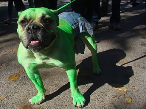 Dog-Hulk